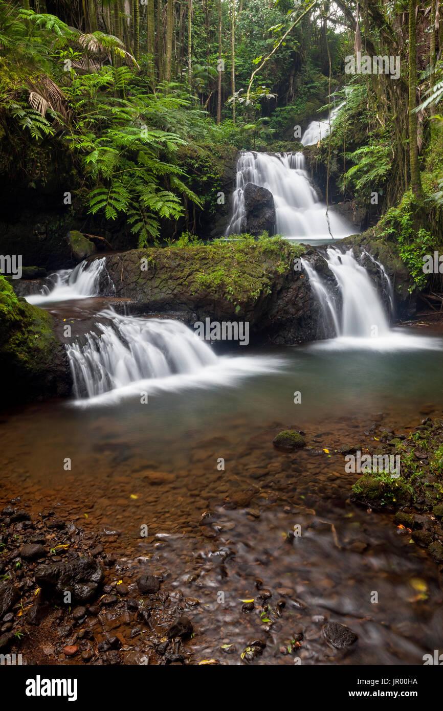 HI00326-00...HAWAI'I - Waterfall in the Hawaii Tropical Botanical Garden near Hilo on the Island of Hawai'i. - Stock Image