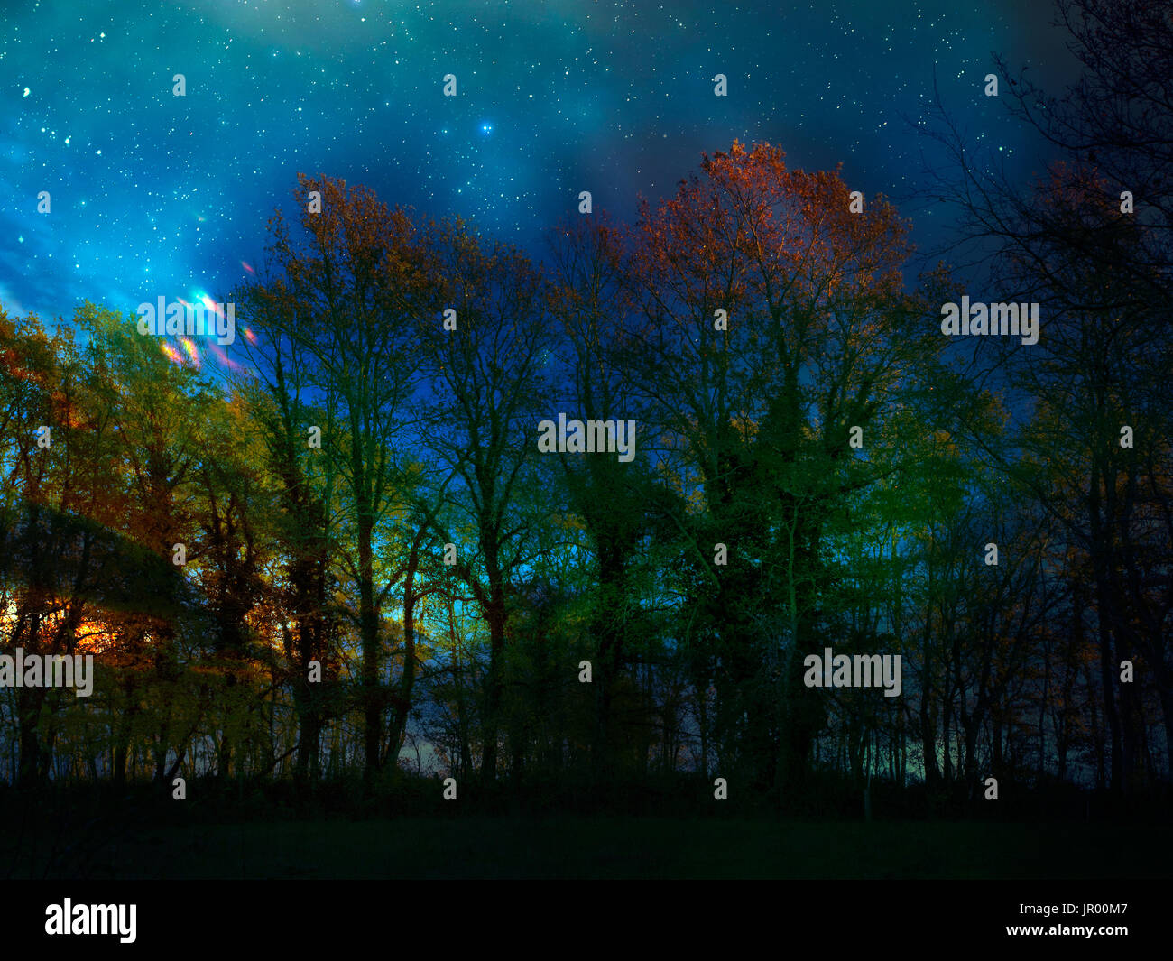Strange lights in the forest. UFO? - Stock Image