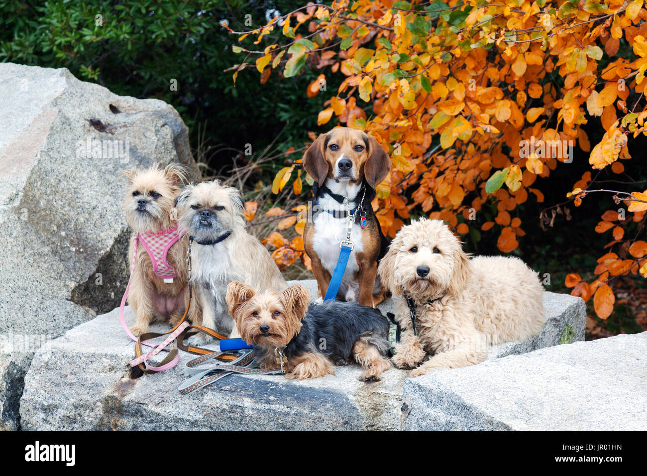Dogs in the park - Stock Image