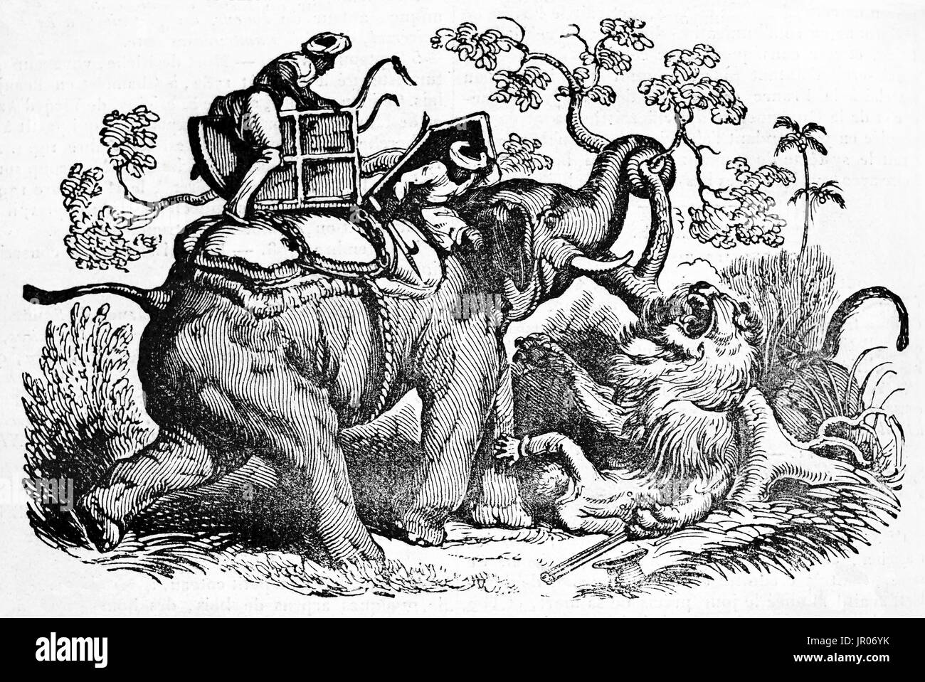 Old illustration depicting a dramatic episode of  lion hunt. By unidentified author, published on Magasin Pittoresque, Stock Photo