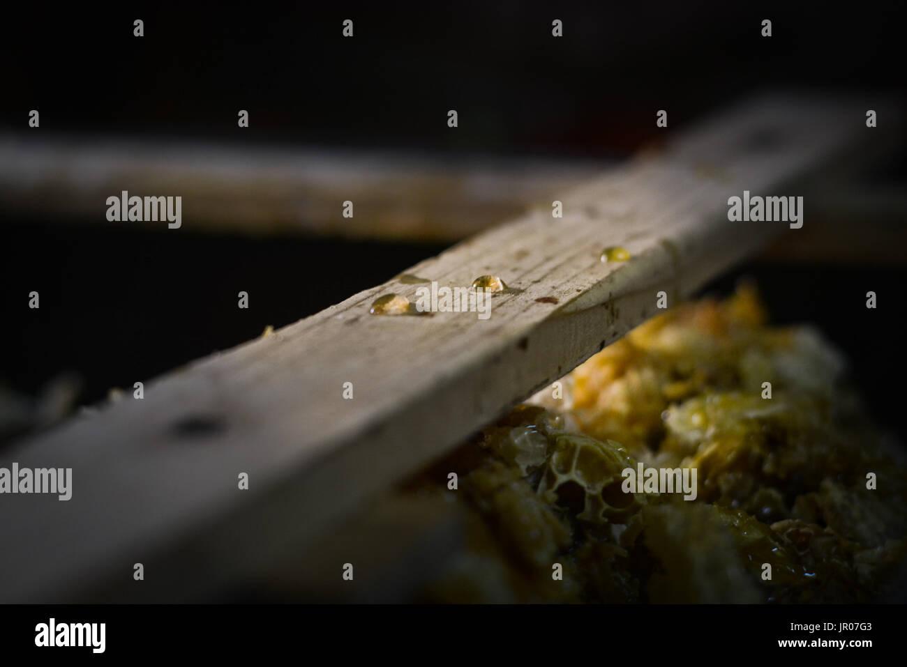 Honey drops - Stock Image