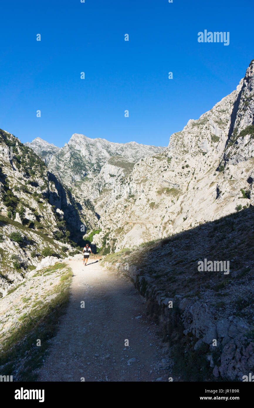 Runner in the cares gorge, Garganta del Cares, is famous for its walking route, Ruta del Cares, Picos de Europa National Park - Stock Image