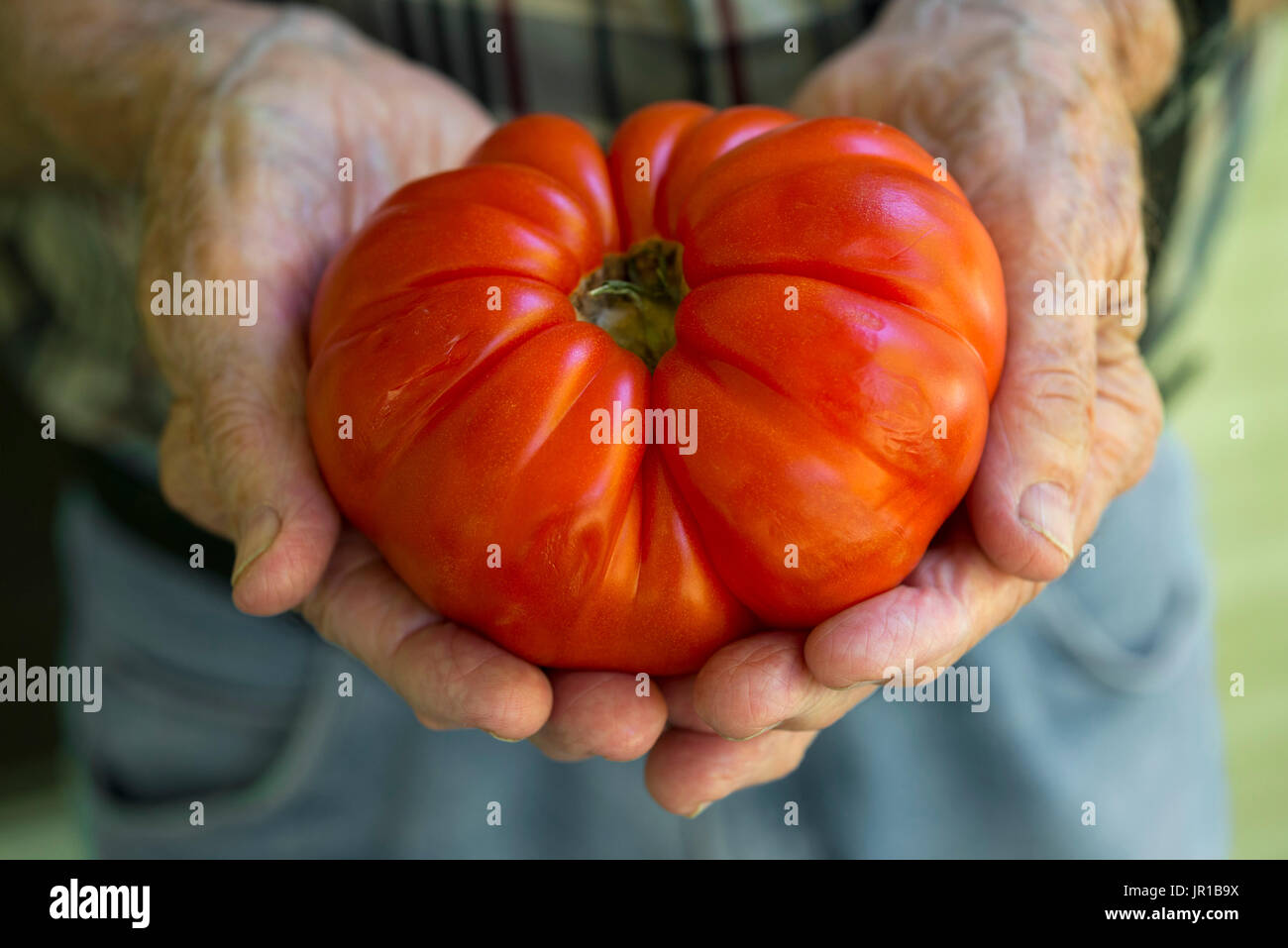 Heirloom Tomato - Stock Image