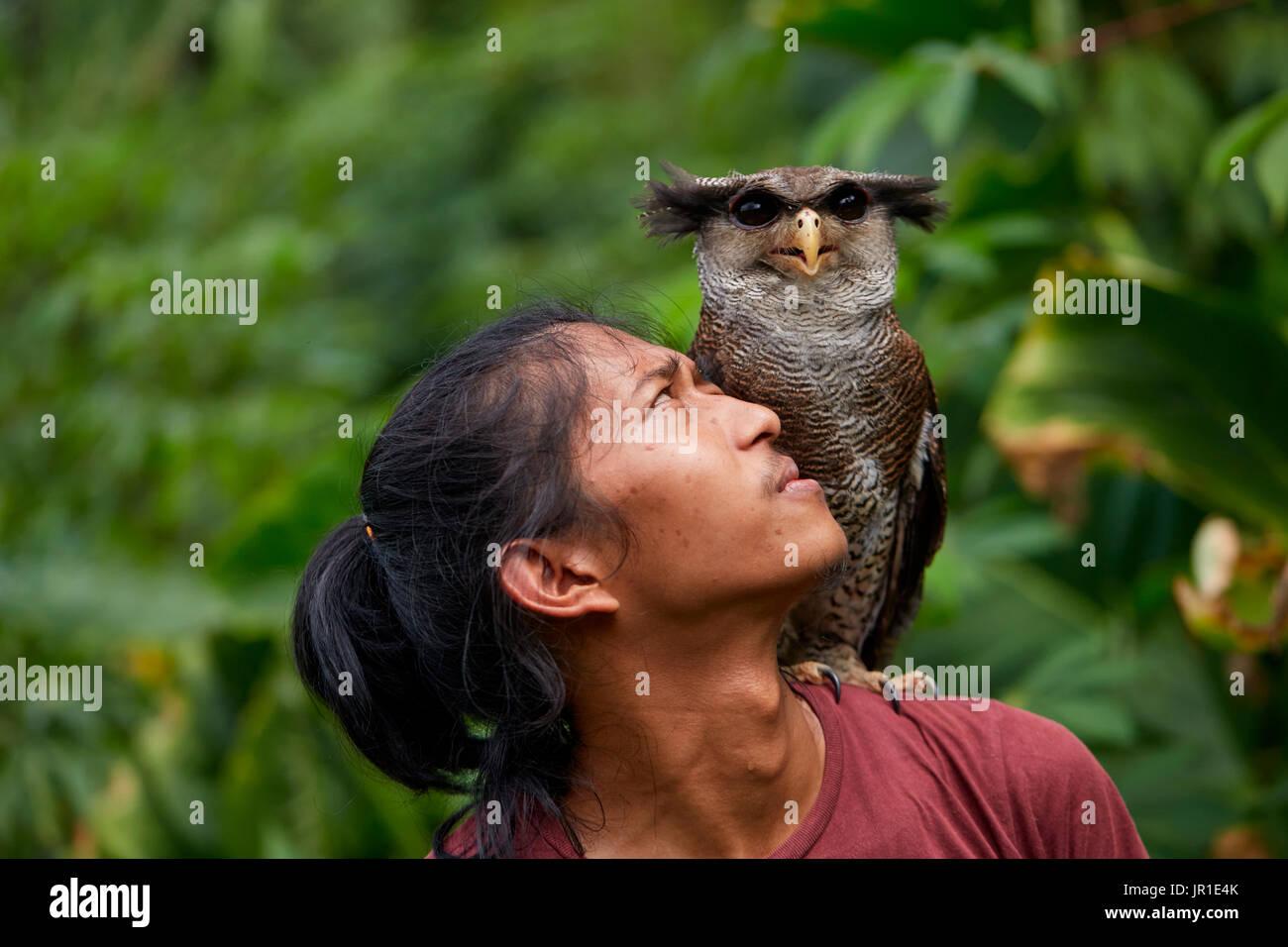 Barred eagle-owl,also called the Malay eagle-owl (Bubo sumatranus) and his keeper, Harau Valley, Sumatra, Indonesia - Stock Image