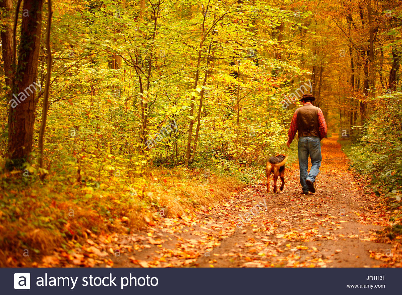 Rambler and his dog in a wood in autumn, October, Picardy, France. - Stock Image