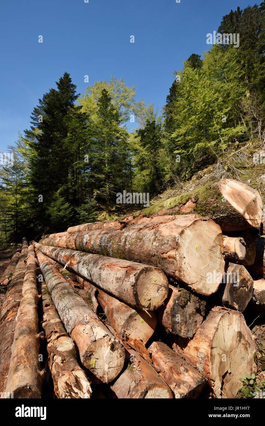 Forest, fir and spruce logs, Ballon d Alsace, Territoire de Belfort (90), France - Stock Image