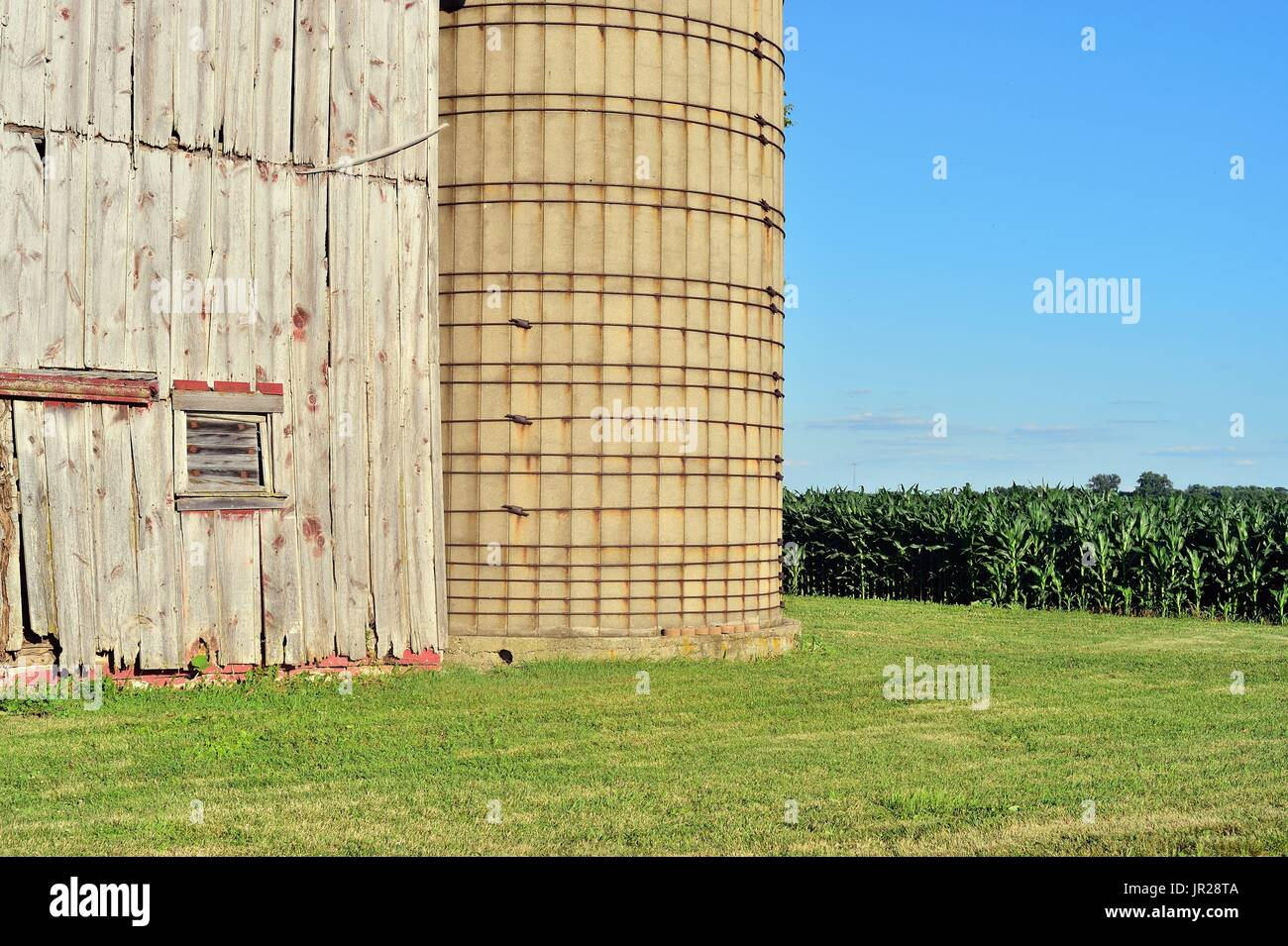 Burlington, Illinois, USA. A venerable, weathered barn and silo silently stand guard over a maturing corn crop. - Stock Image