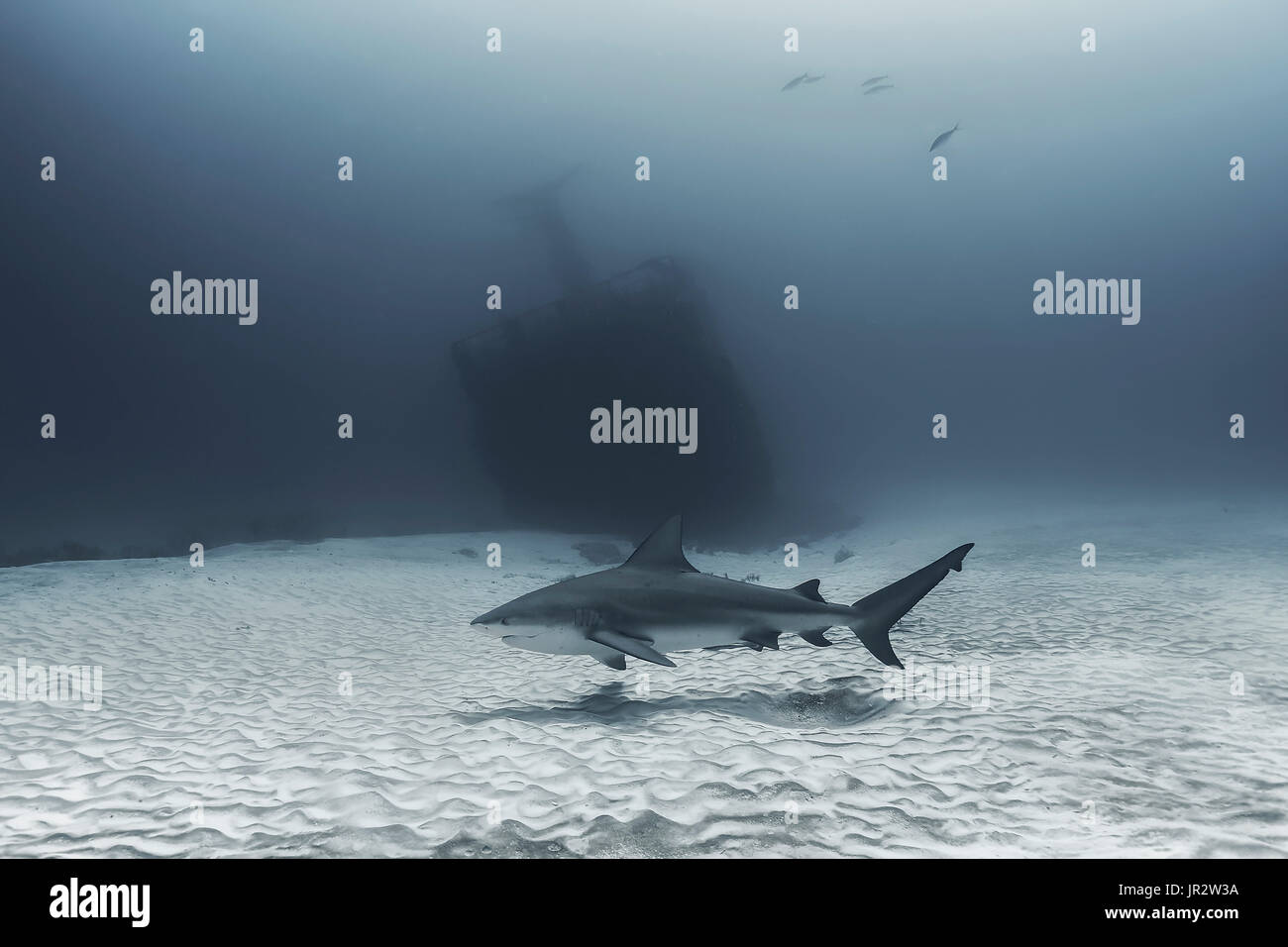 Bull shark(Carcharhinus leucas) in front of a wreck - Caribbean sea Stock Photo