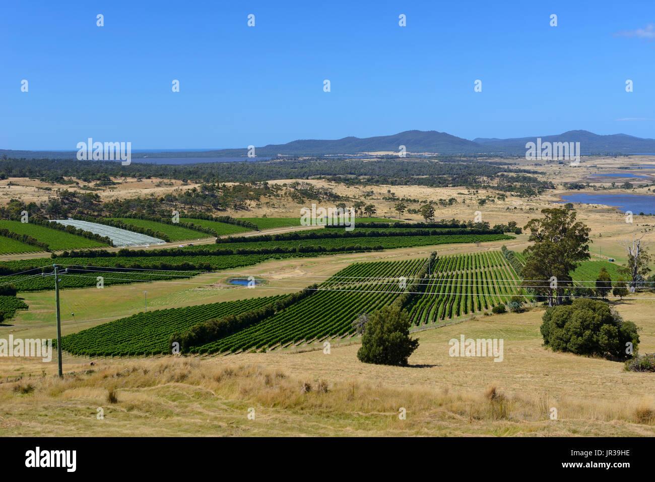 Vineyards around town of Apslawn on Tasman Highway on East Coast of Tasmania, Australia - Stock Image