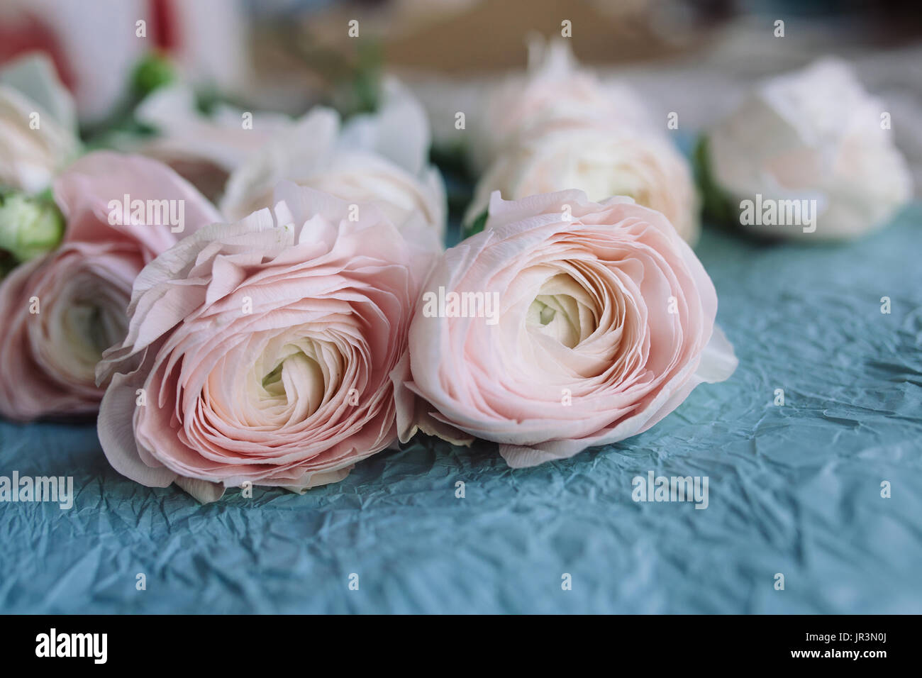 Pale Pink And White Ranunculus Bouquet On A Blue Background On Blue