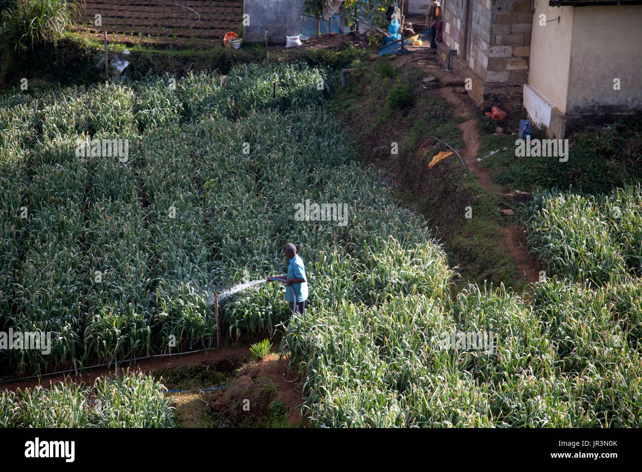 tea workers houses hill country central province sri lanka - Stock Image