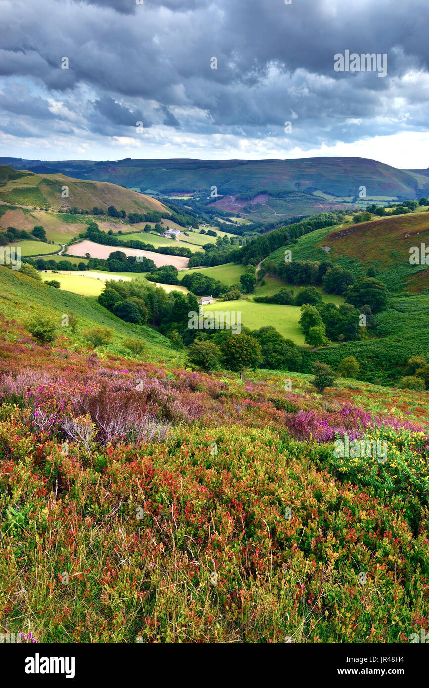 A summer view of the colourful landscape of Clwyd, North Wales, United Kingdom - Stock Image