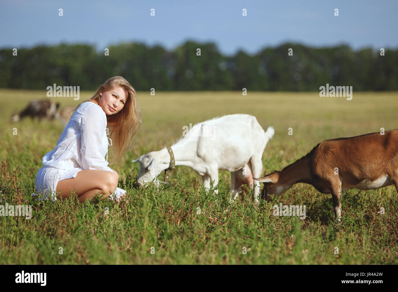 Woman feeds goats in the field, a summer bright day. - Stock Image