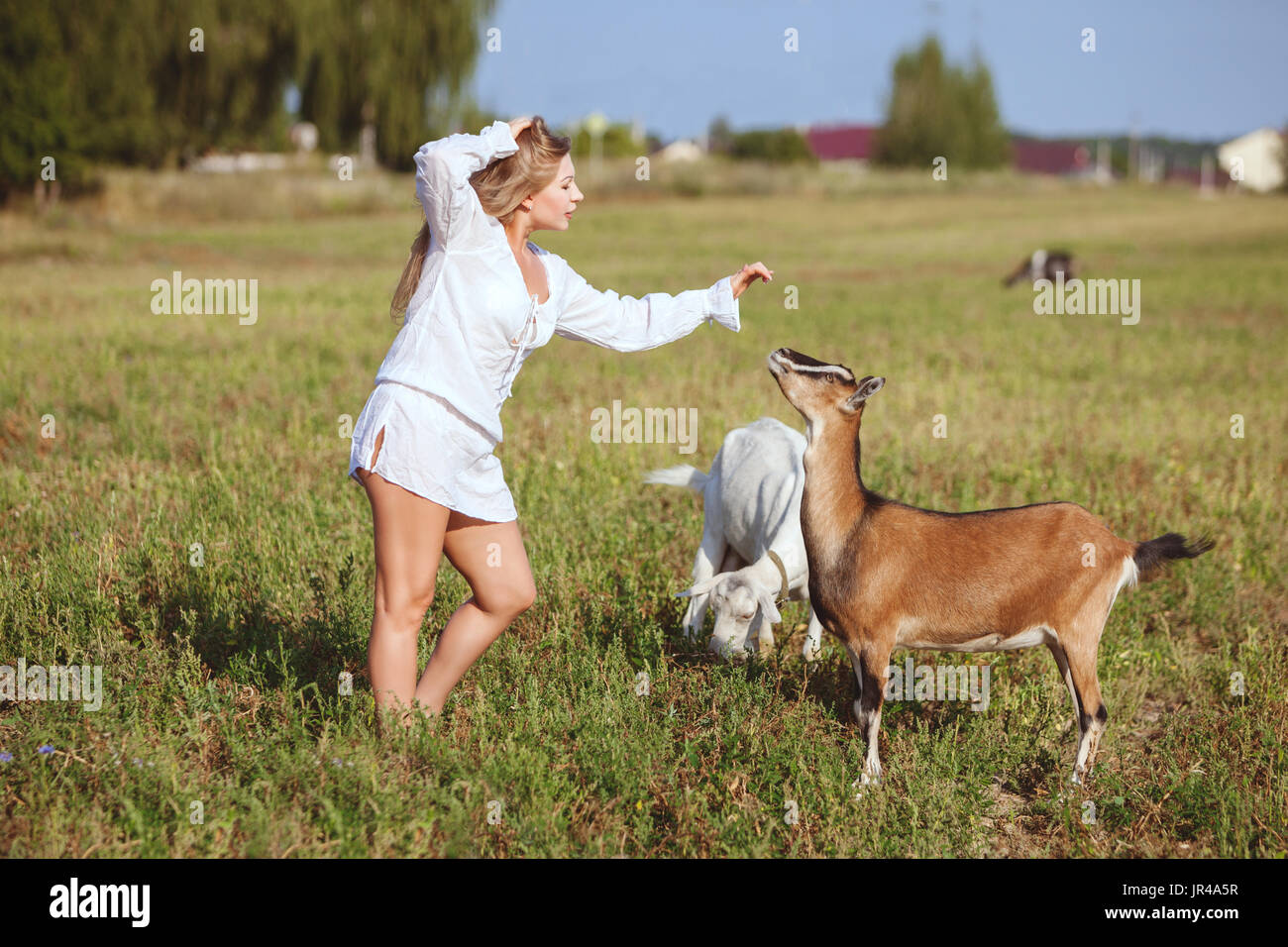 Woman is stroking a domestic goat, they are in a field on a farm. - Stock Image