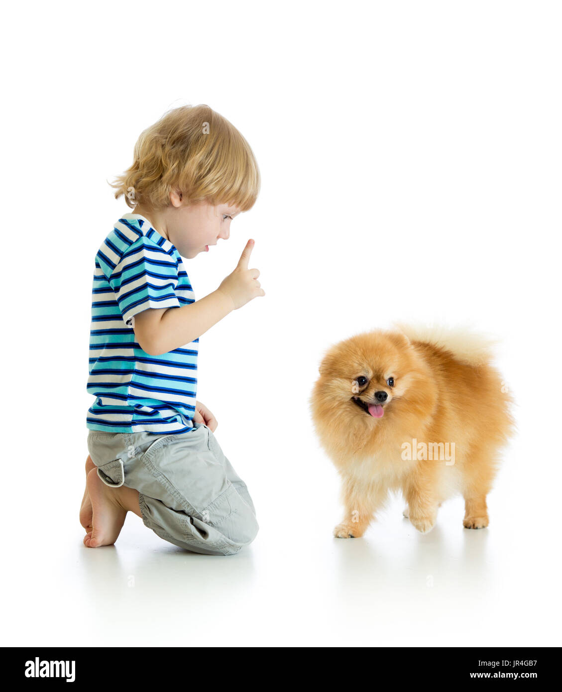 Child boy training Spitz dog. Isolated on white background. - Stock Image