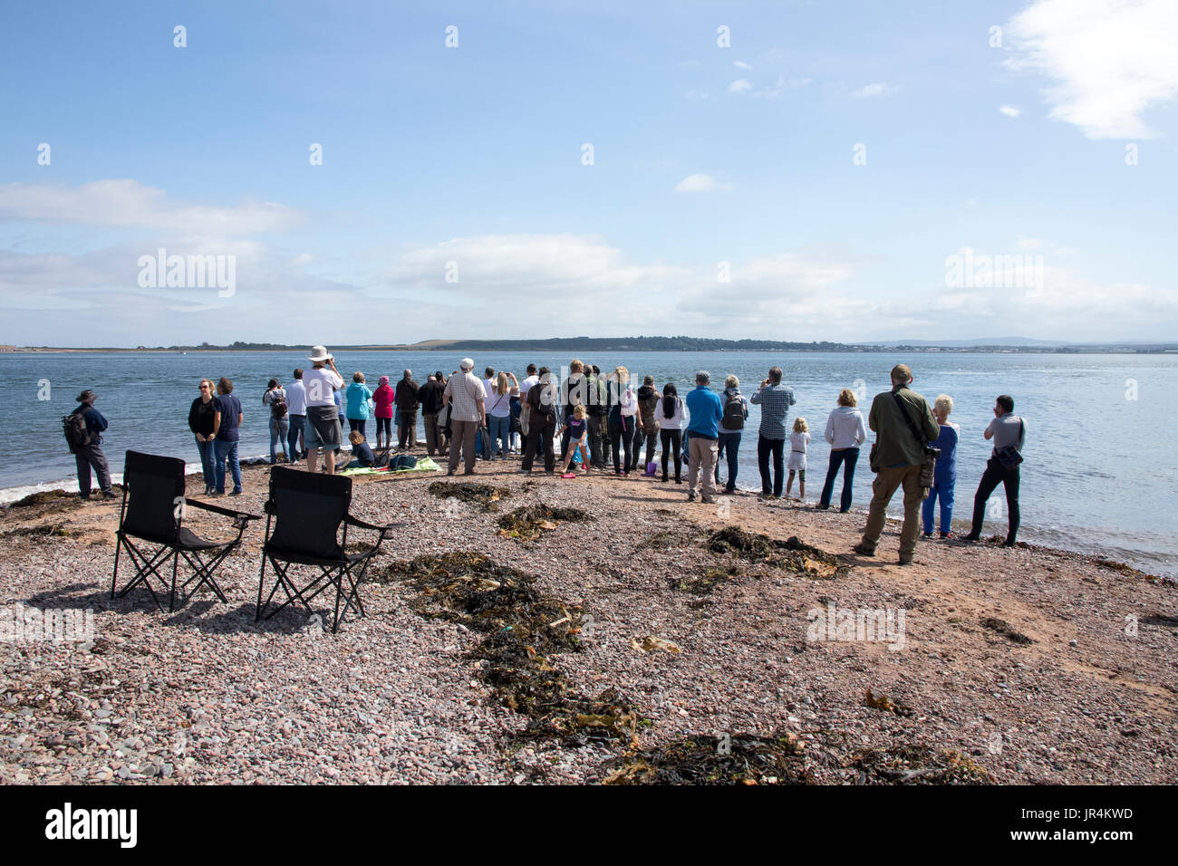 Dolphin watching at Chanonry Point, Moray Firth, Scotland - Stock Image