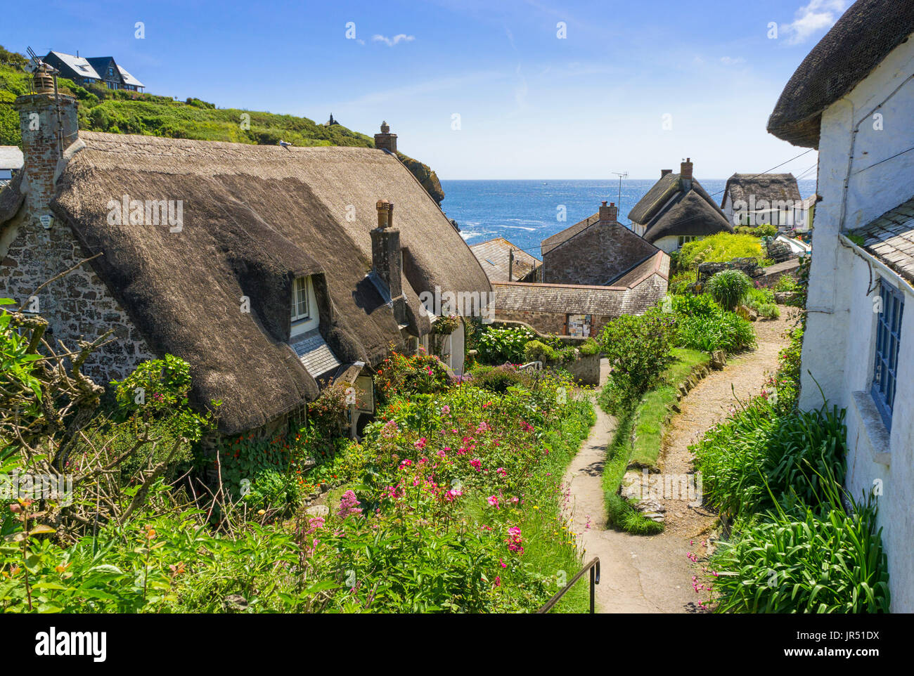 Thatched roof on a thatched cottage at Cadgwith Cove, Lizard Peninsula, Cornwall, England, UK - Stock Image