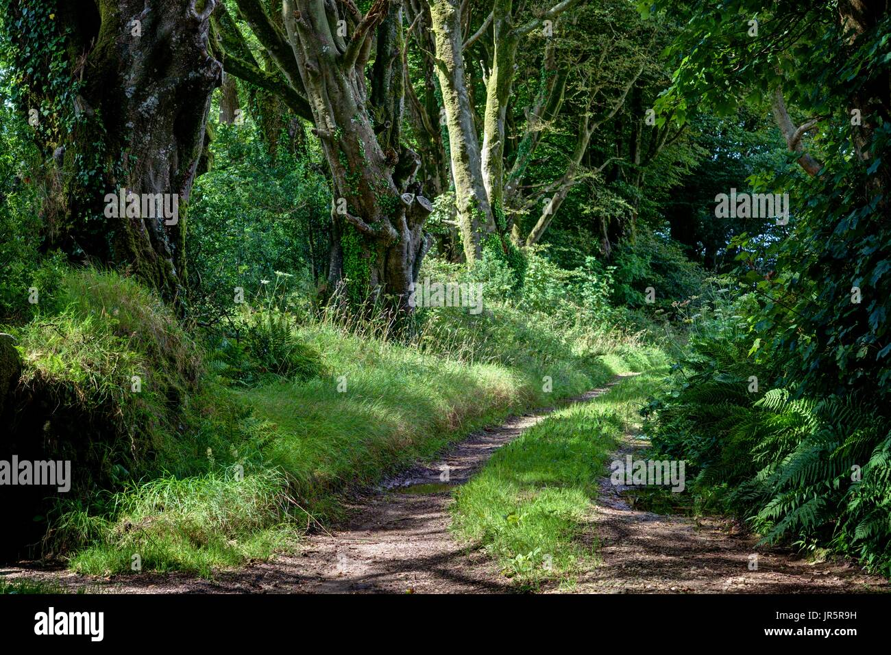 Horizontal landscape of a typically English countryside farm track leading off a quiet rural lane. Lush greenery lined with old broad leaved trees - Stock Image