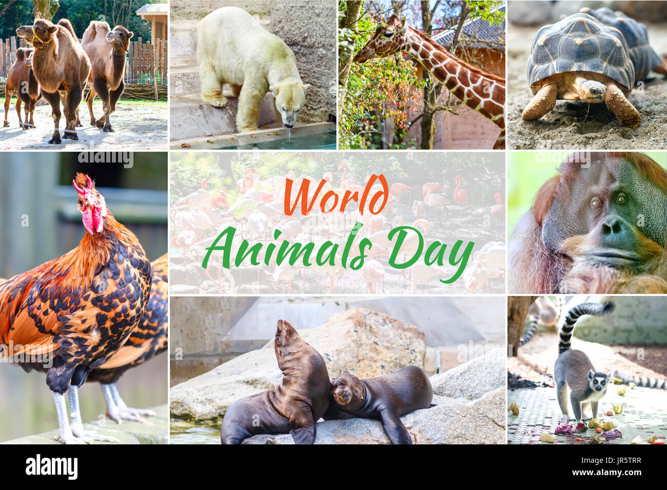 World Animal Day - Stock Image