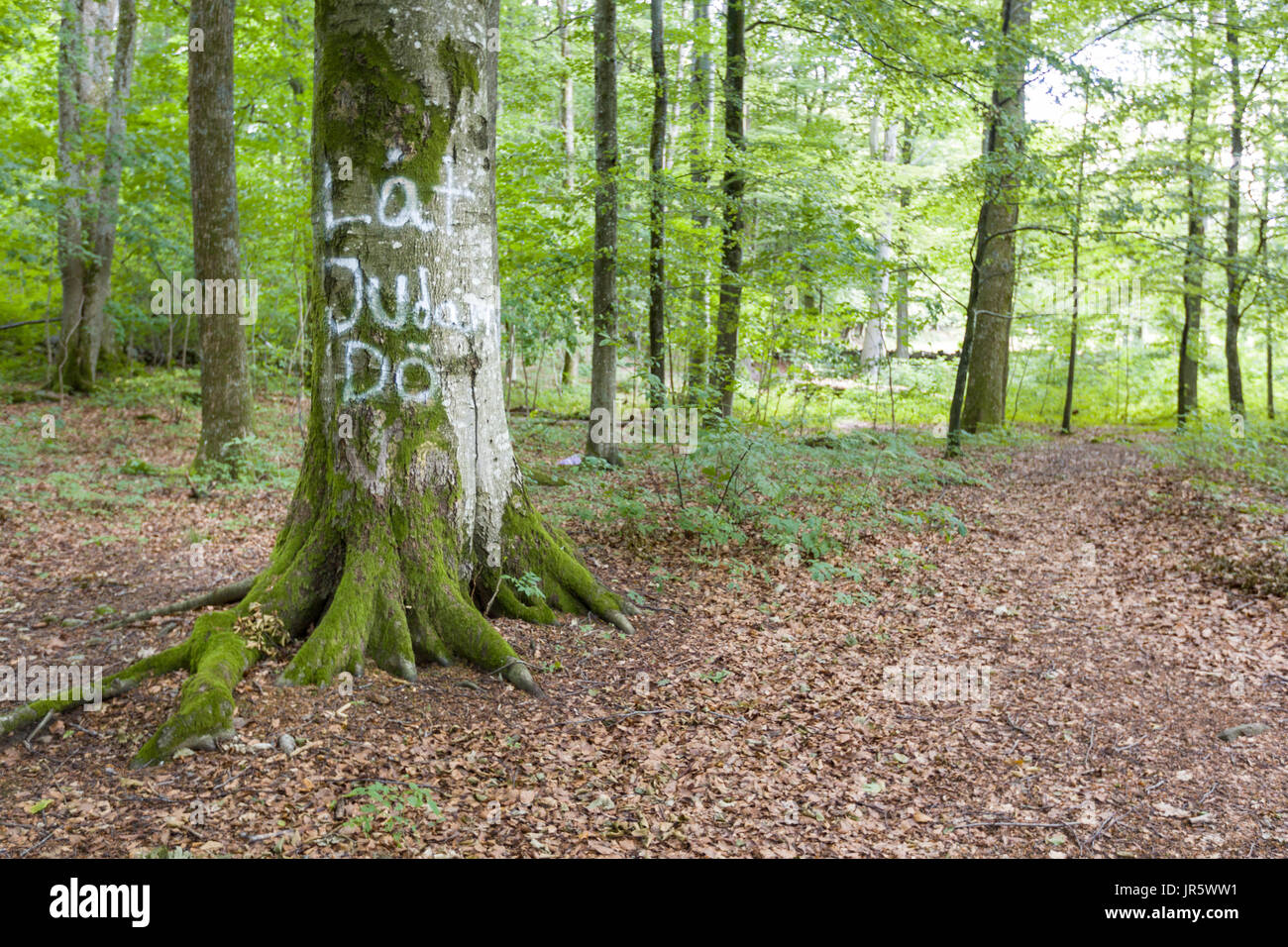 Anti semitic graffiti in swedish 'Let The Jews Die' spray painted on tree in forest in Floda, Sweden  Model Release: No.  Property Release: No. - Stock Image