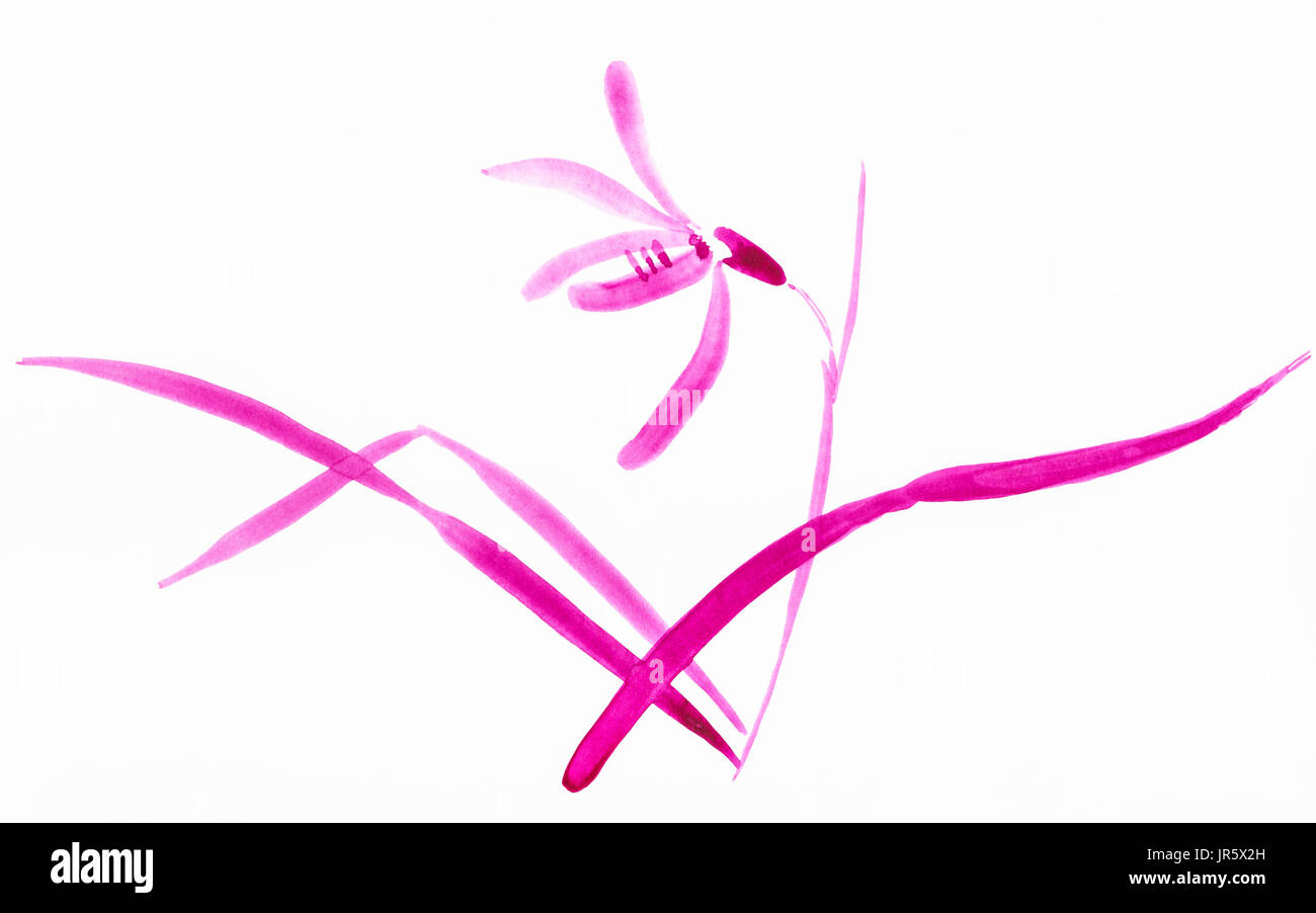 training drawing in suibokuga style with watercolor paints - magenta sketch of orchid flower on white paper - Stock Image