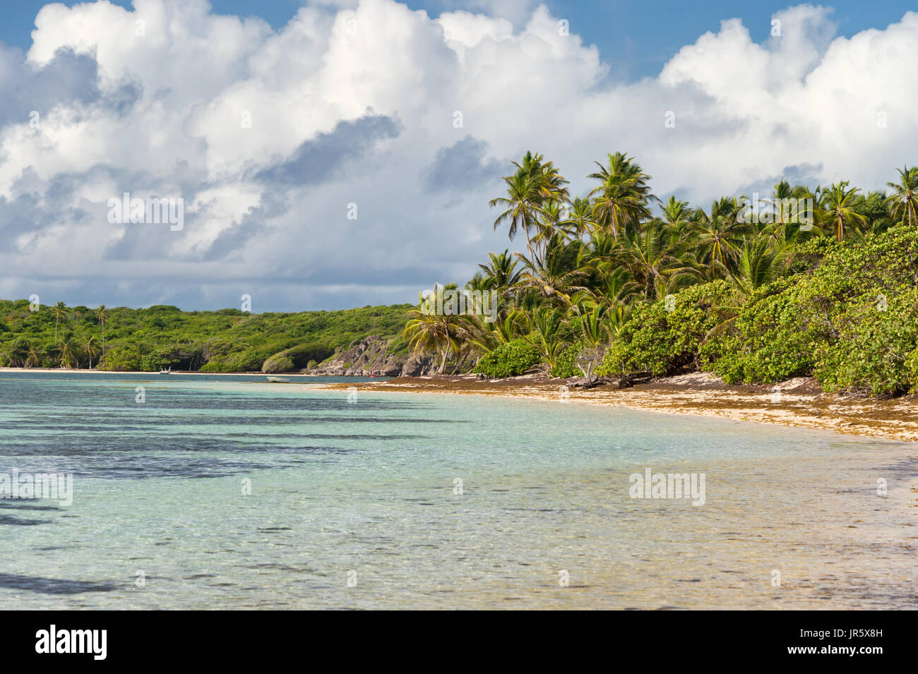 Beautiful exotic Caribbean beach with palm trees in Martinique (Anse Michel) - Stock Image