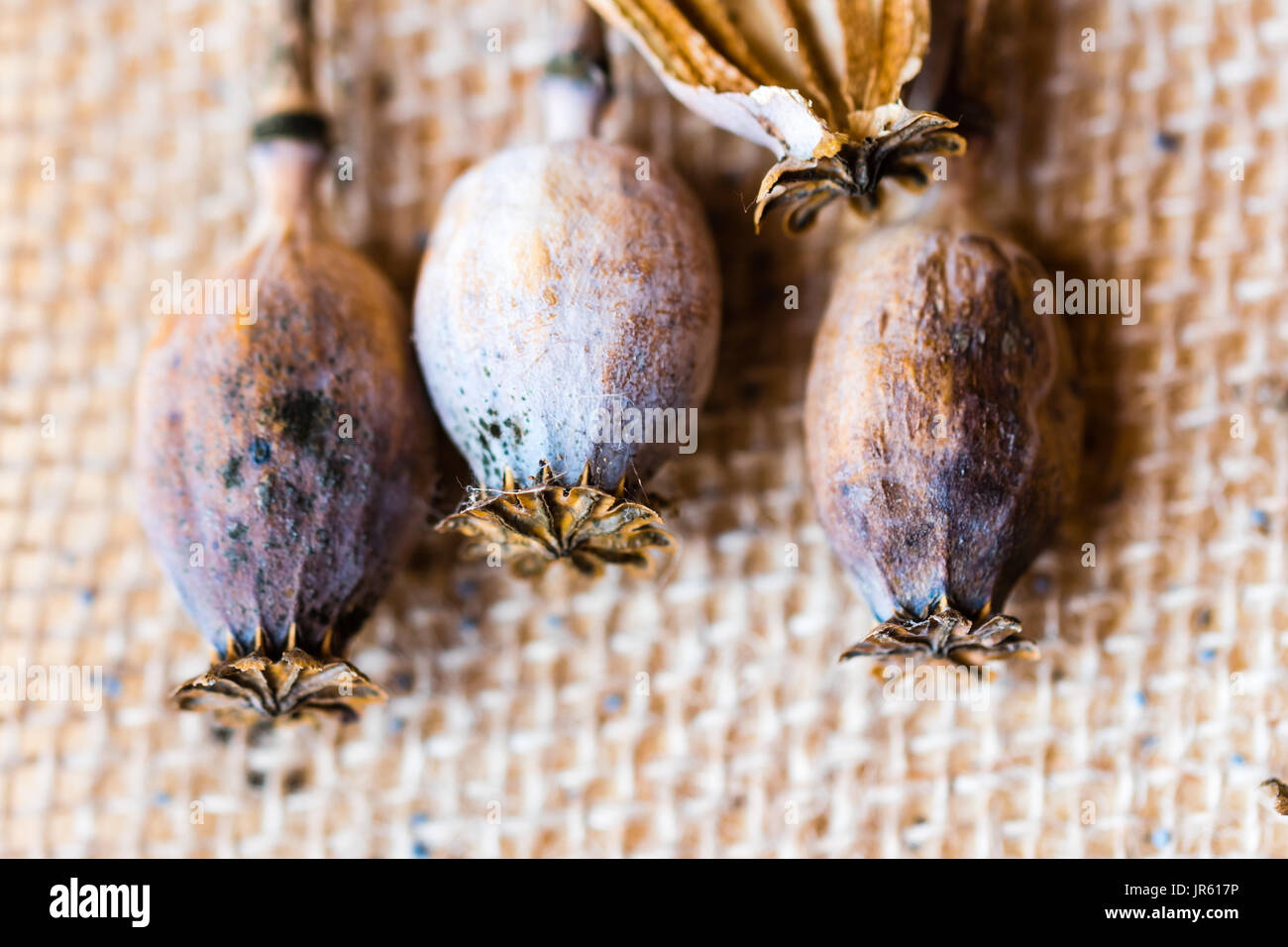 Macro photography of poppy heads and poppy seeds on textile rustic background. - Stock Image