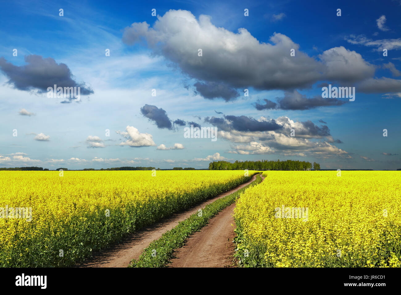 Landscape with blossoming field and road Stock Photo