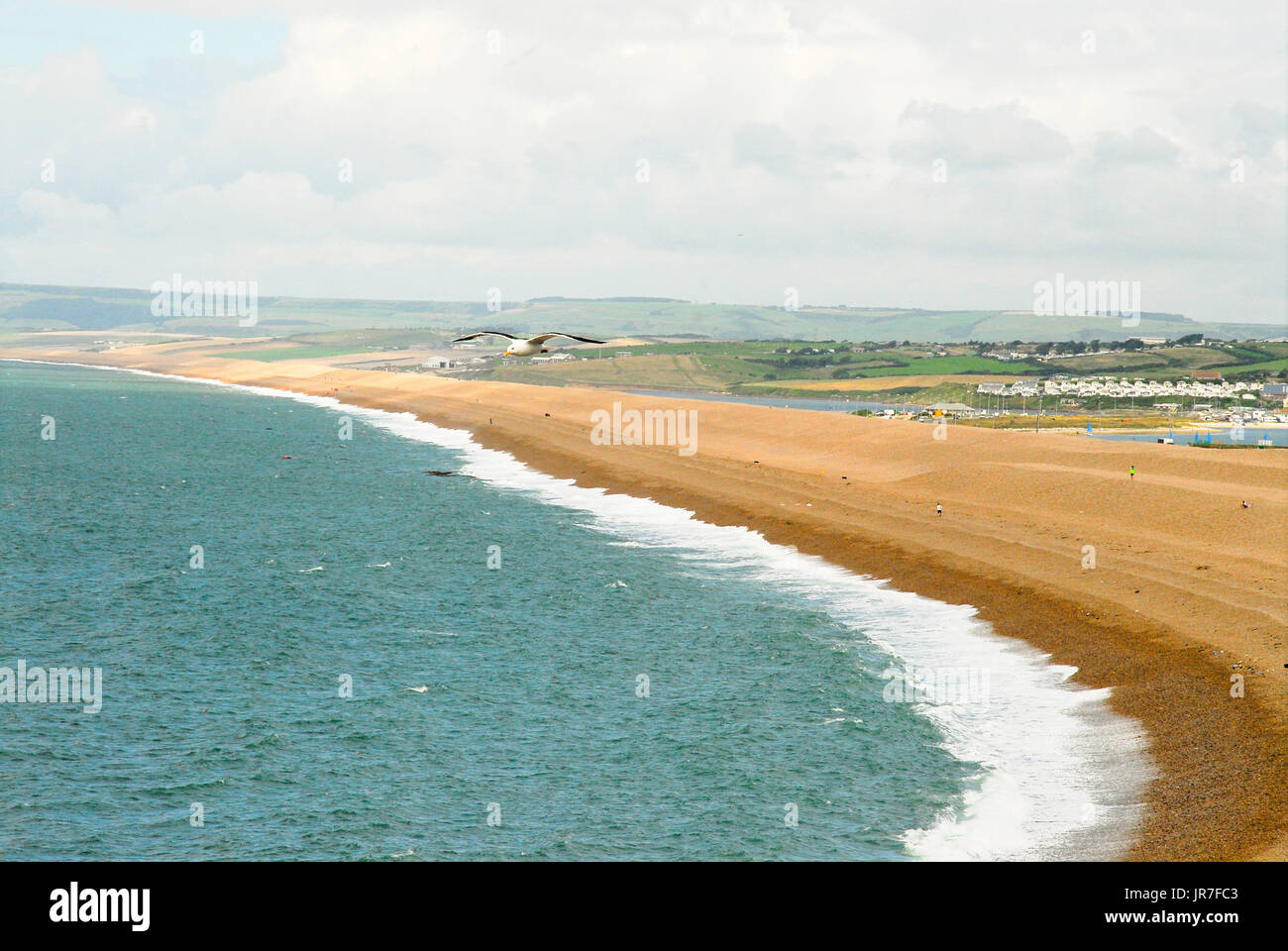 Chesil Beach, Dorset. 04th Aug, 2017. UK Weather: A seagull soars over Chesil Beach on Portand, on a day of sunny spells in Dorset Credit: stuart fretwell/Alamy Live News - Stock Image