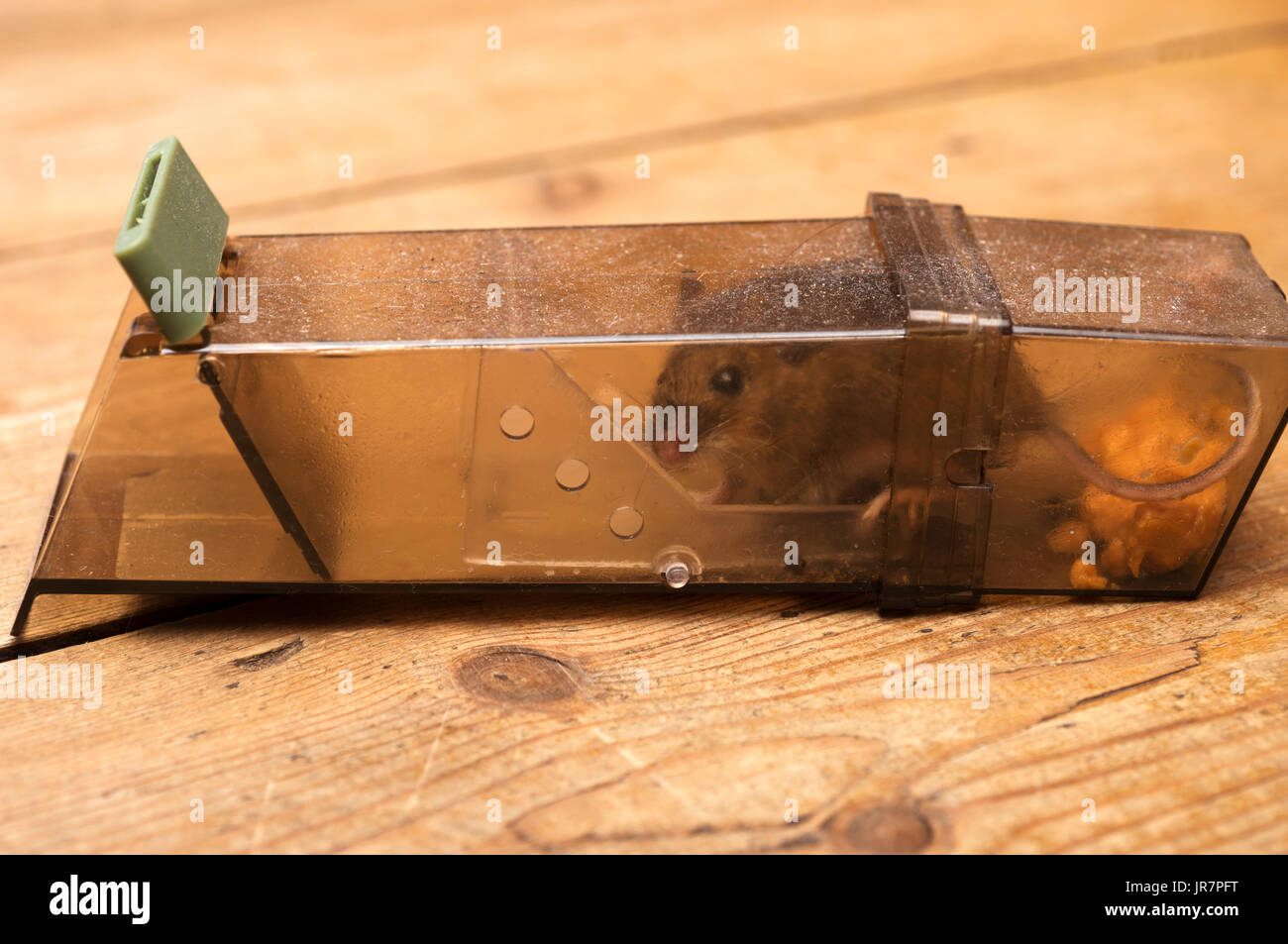 Humane mouse trap Stock Photo