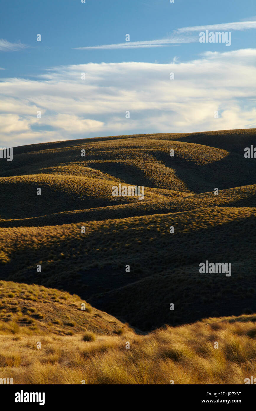 Tussock on Hills beside the Pigroot Highway, Maniototo, South Island, New Zealand Stock Photo