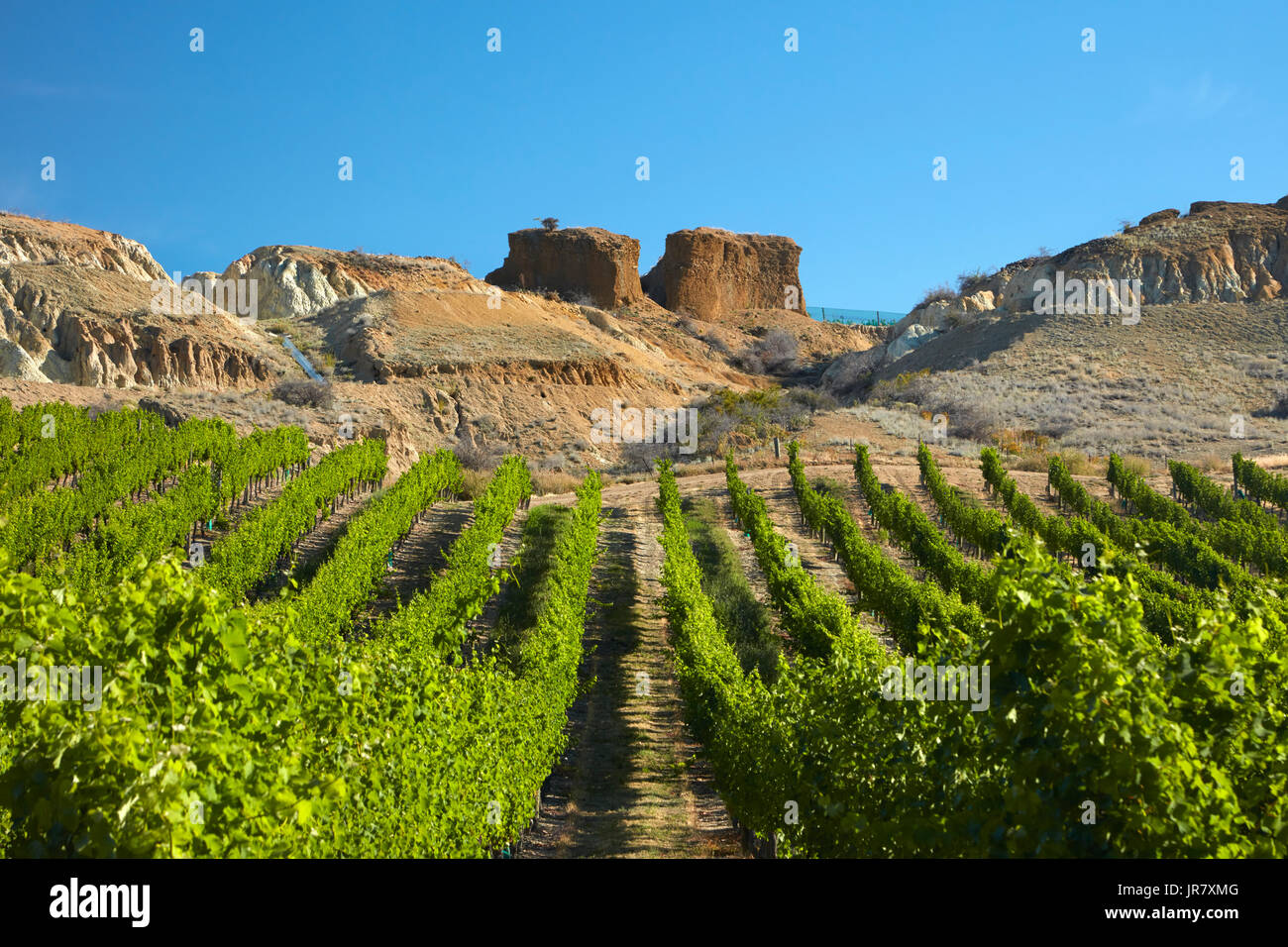 Mt Difficulty Vineyard, and historic gold sluicings, Bannockburn, Central Otago, South Island, New Zealand - Stock Image