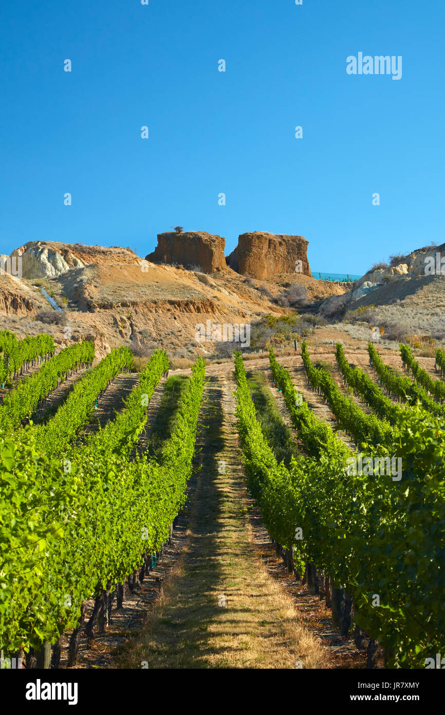 Mt Difficulty Vineyard, and historic gold sluicings, Bannockburn, Central Otago, South Island, New Zealand Stock Photo