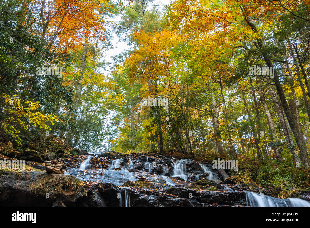 Colorful Autumn trees over beautiful Trahlyta Falls at Vogel State Park in the Blue Ridge Mountains of North Georgia. (USA) - Stock Image
