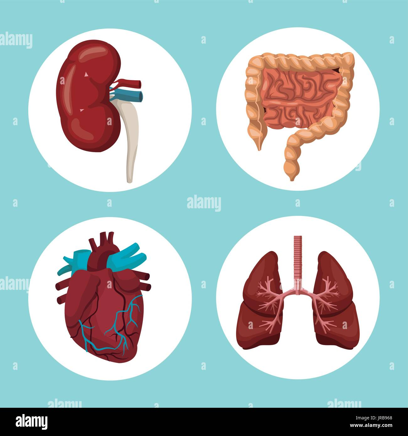 color background with circular frames of human body organs - Stock Image