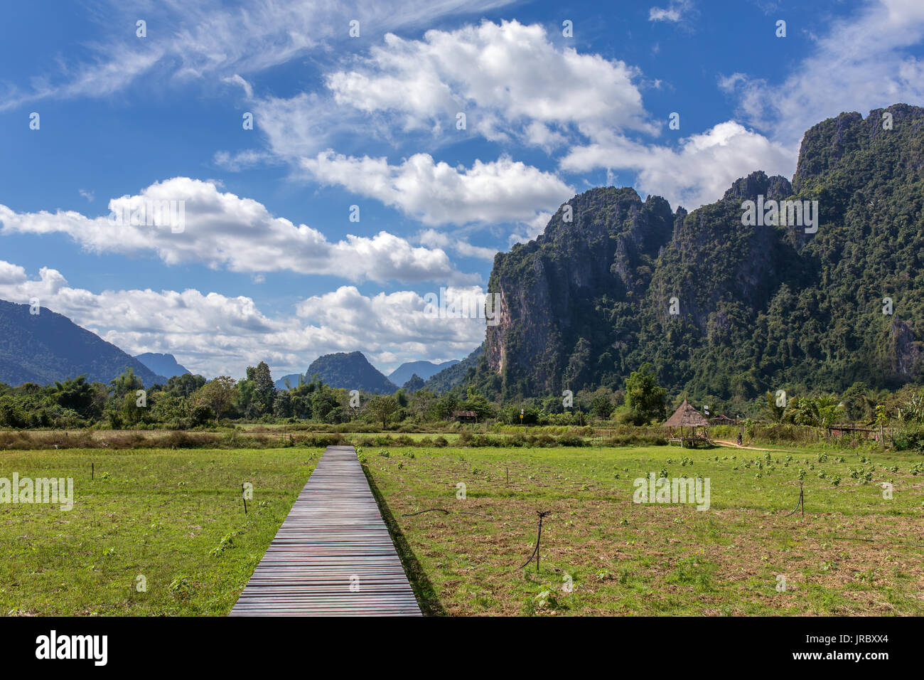 Wood bridge and paddy field rice in Vang Vieng, Laos - Stock Image