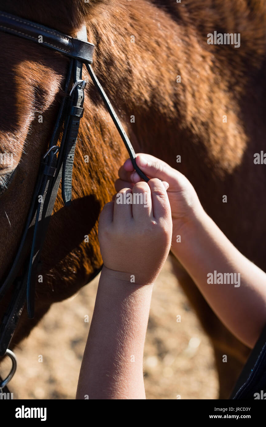 Close-up of hand caressing white horses mouth - Stock Image