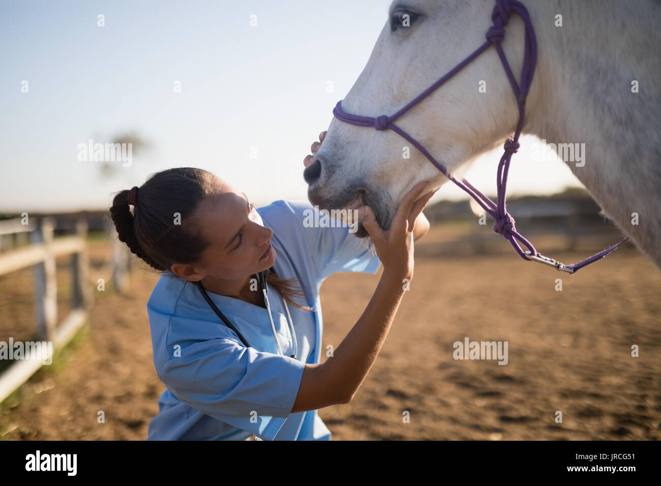 Female vet examining horse mouth at barn - Stock Image