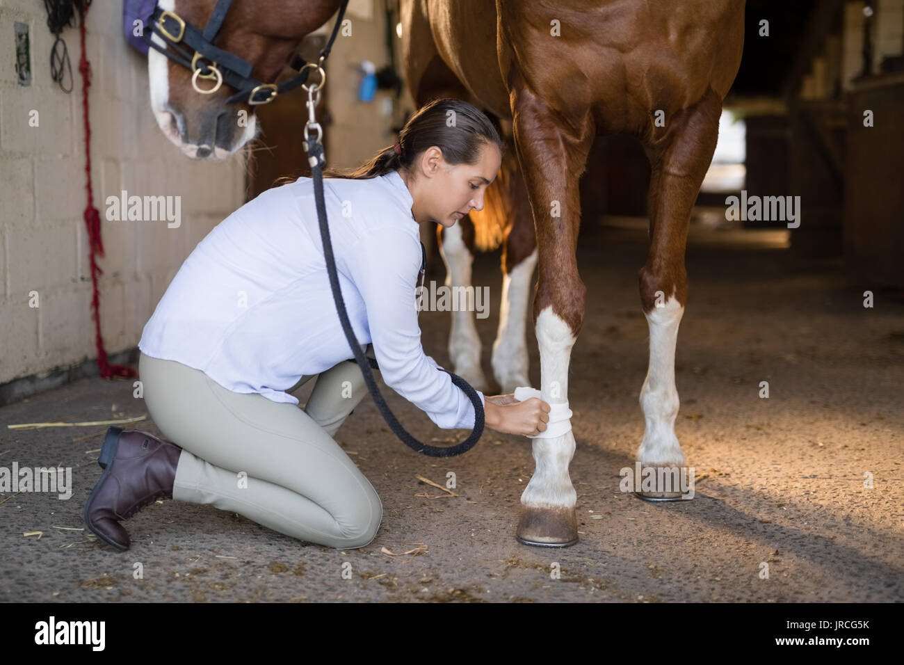 Side view of female vet examining horse in stable - Stock Image