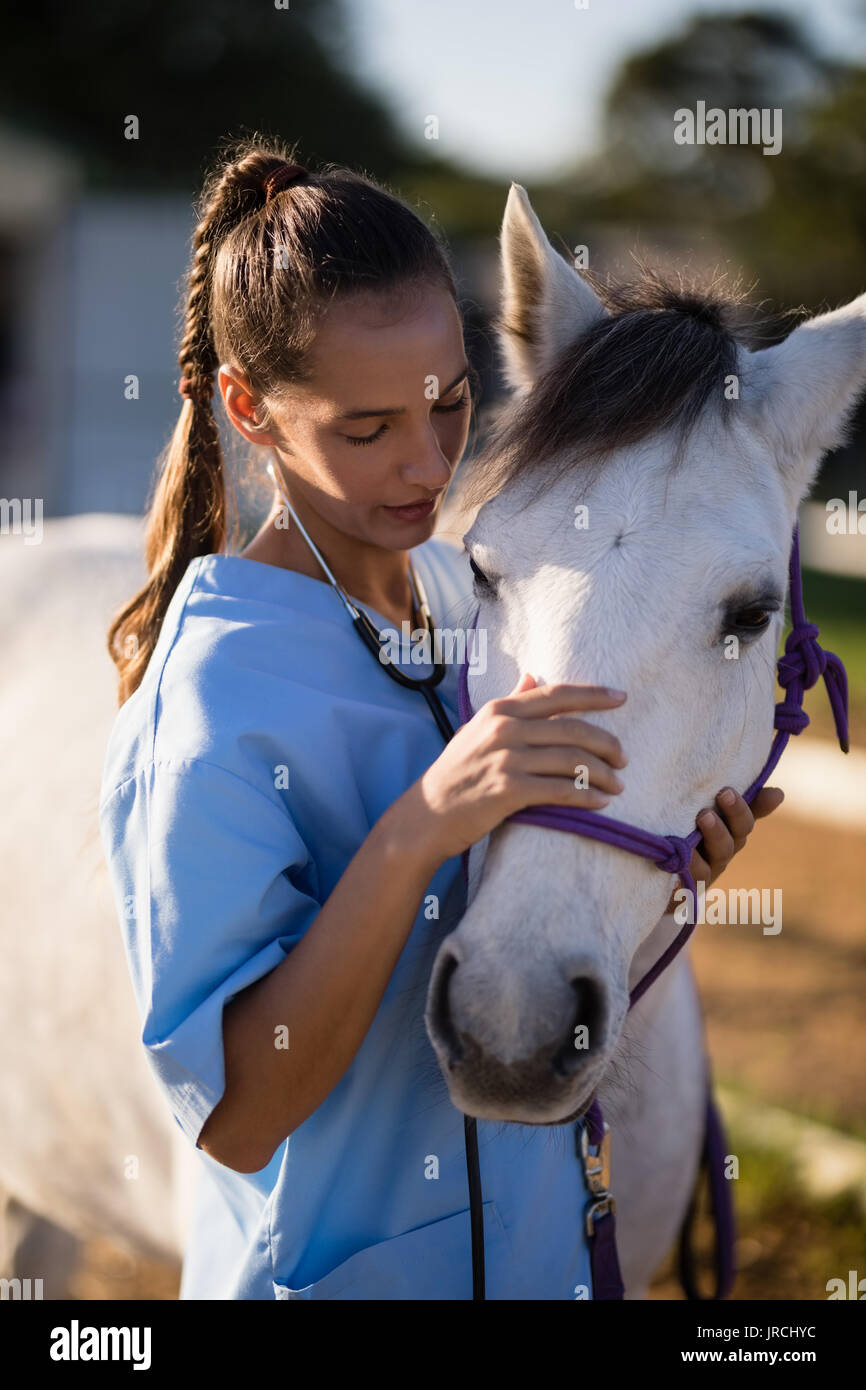 Female vet stroking white horse while standing at paddock - Stock Image