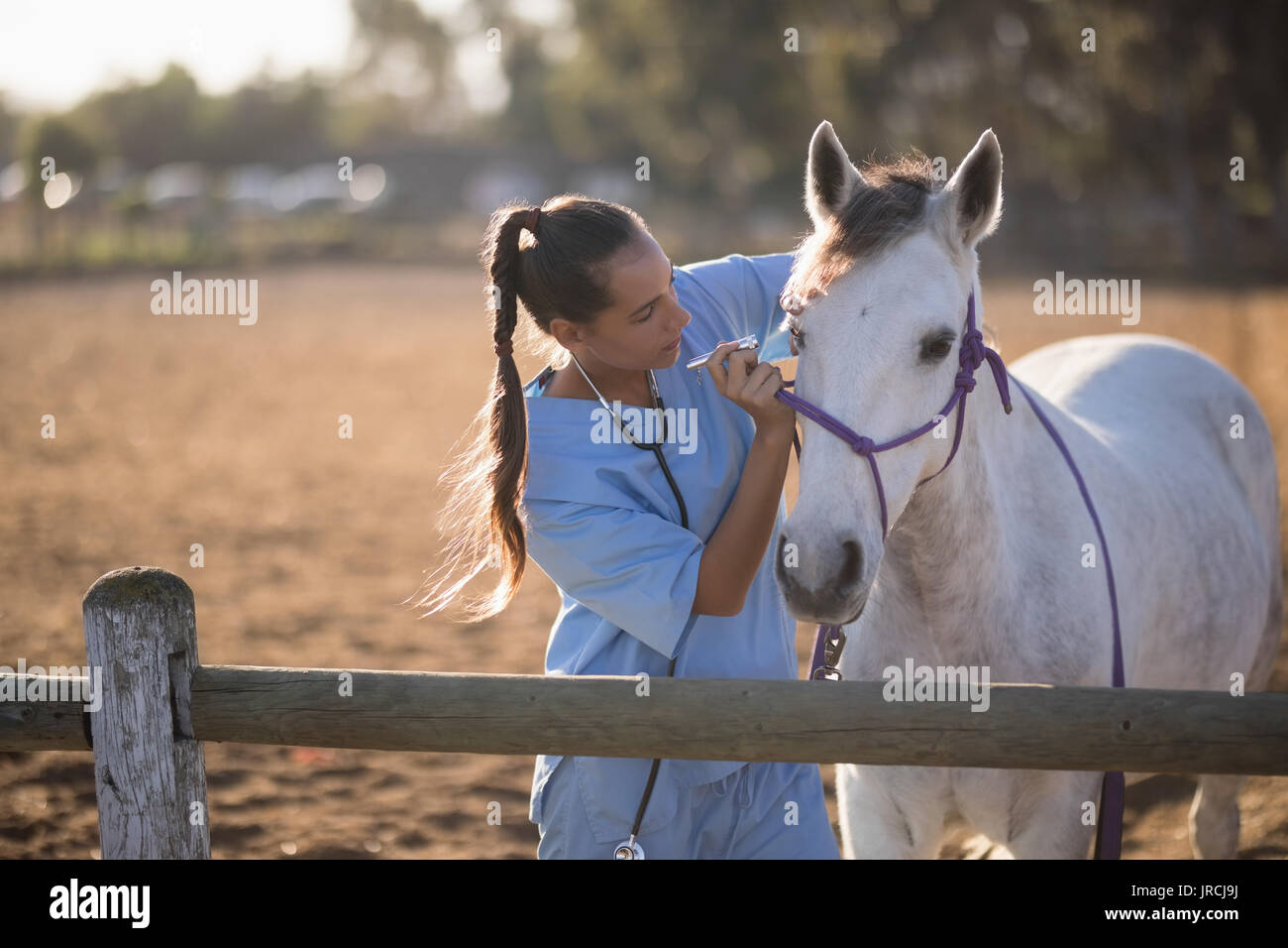 Female vet examining horse eye at barn - Stock Image