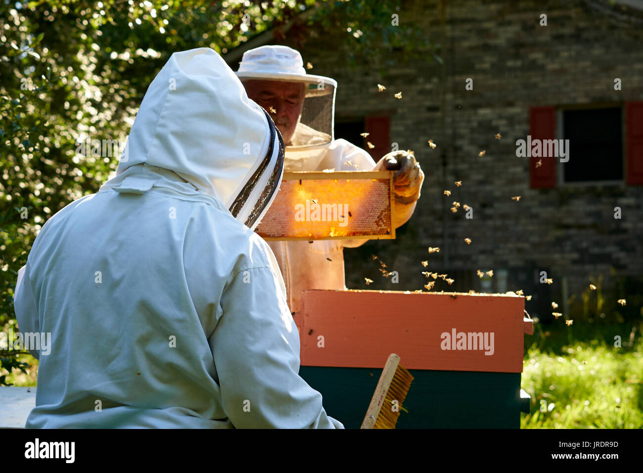 The golden color honey is the prize that bee keepers are looking for. Jim and Patti Butler of Vernon, Alabama get ready to extract the honey fron the  - Stock Image