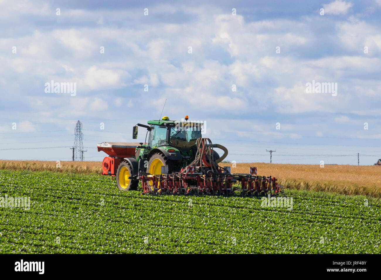Tarleton, Lancashire, UK Weather. 5th August, 2017. Bright sunny day for farmers take advantage of the drying soils to plant and attend to their crops in the field. The area, known as the Salad Bowl of Lancashire, produces high quality vegetables for the supermarkets of England and is a large employer of EU migrant workers. Credit; MediaWorldImages/AlamyLiveNews. - Stock Image