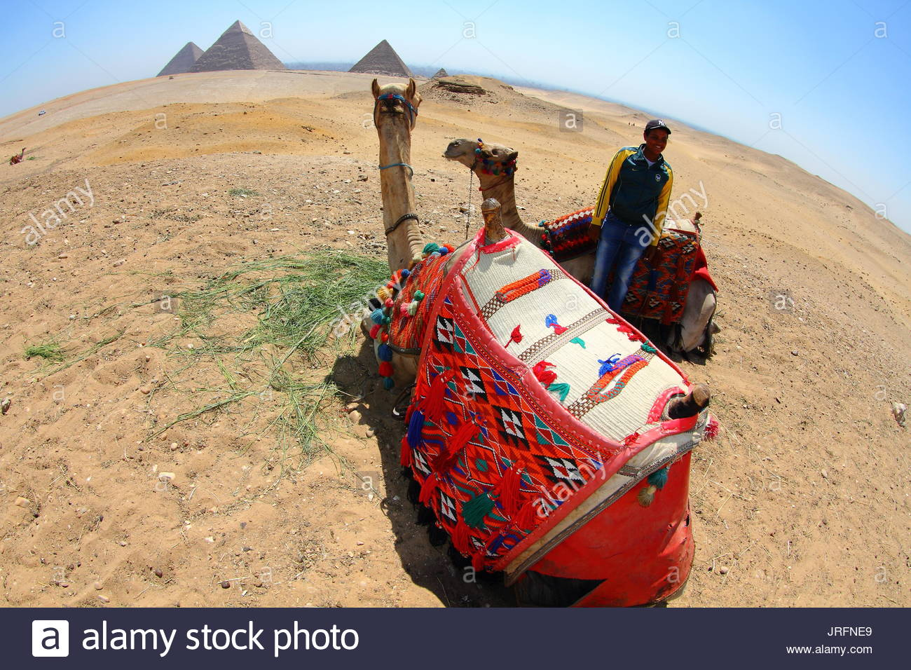 Egypt - Cairo - Pyramids site, camel and camel rider - Stock Image