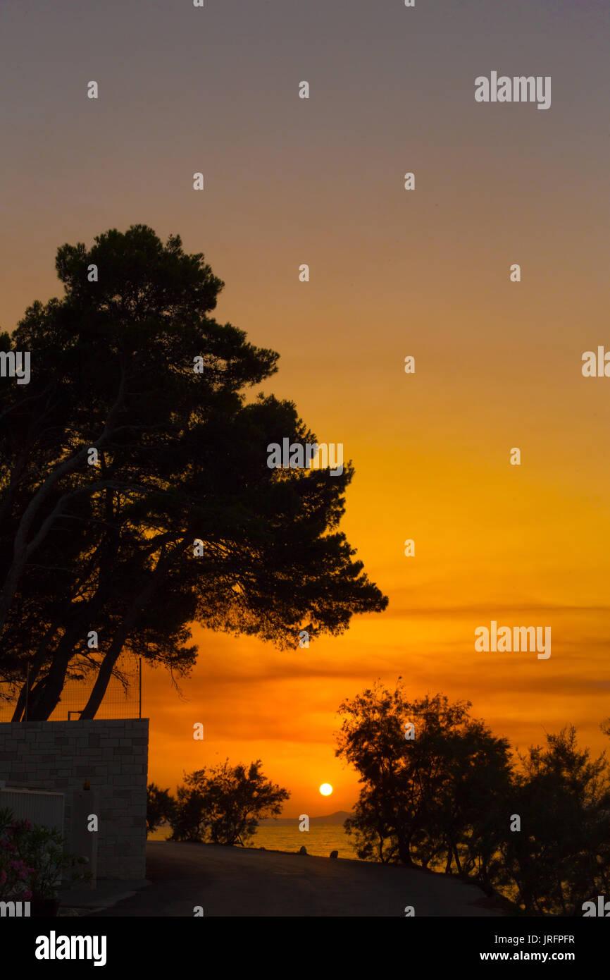 Sun setting under a pine tree on the Dalmatian coast on the island of Brac, Croatia - Stock Image