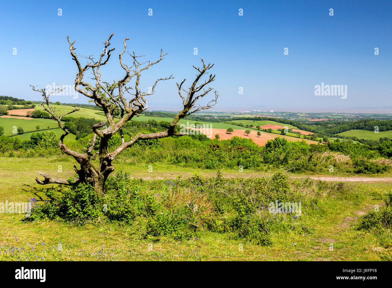Looking north from the summit of Cothelstone Hill on the Quantock Hills towards Hinkley Point and the Bristol Channel, Somerset, England, UK - Stock Image