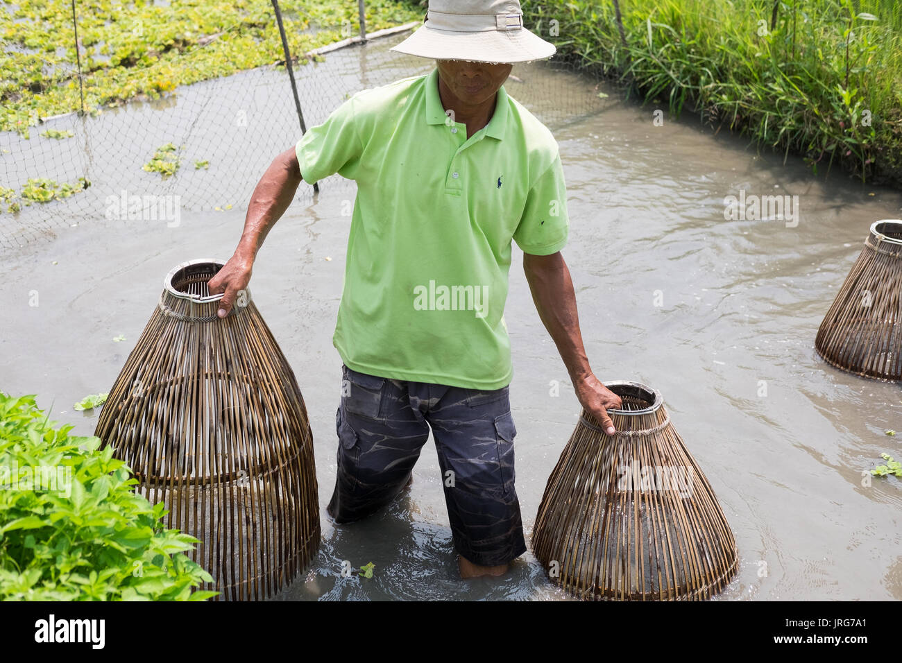 A Vietnamese man retrieves fishing baskets from a fish pond in Hoi An. - Stock Image
