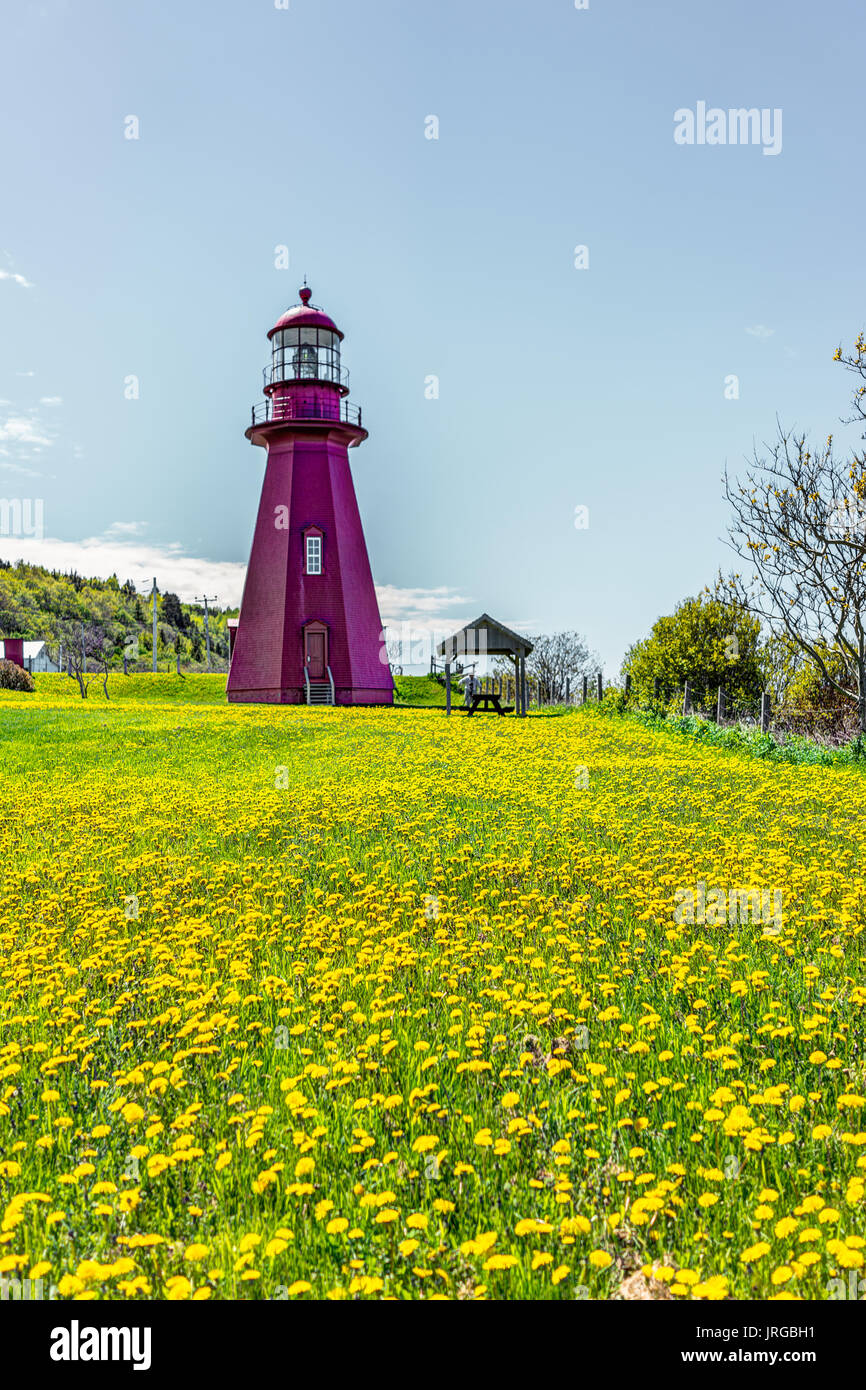 Red painted lighthouse with yellow dandelion flowers in La Martre in the Gaspe Peninsula, Quebec, Canada, Gaspesie region - Stock Image