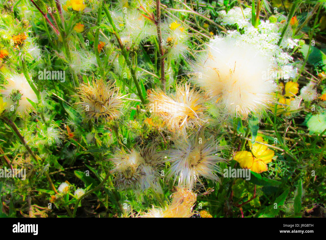 Color full wild flowers and bumblebees in Champagne countryside France - Stock Image