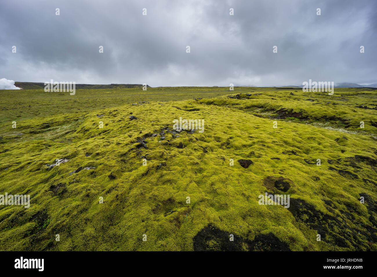 Iceland - Green moss covered lava field - Stock Image
